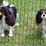 Daisy & Rhu