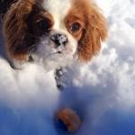Paisley snow2